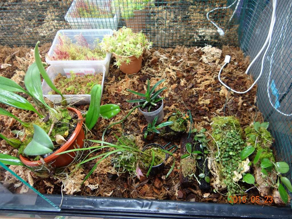 Commande orchidée de chez Bens-jungle . Dsc07715