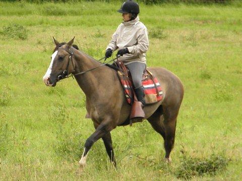 jument paint horse dun P5250114