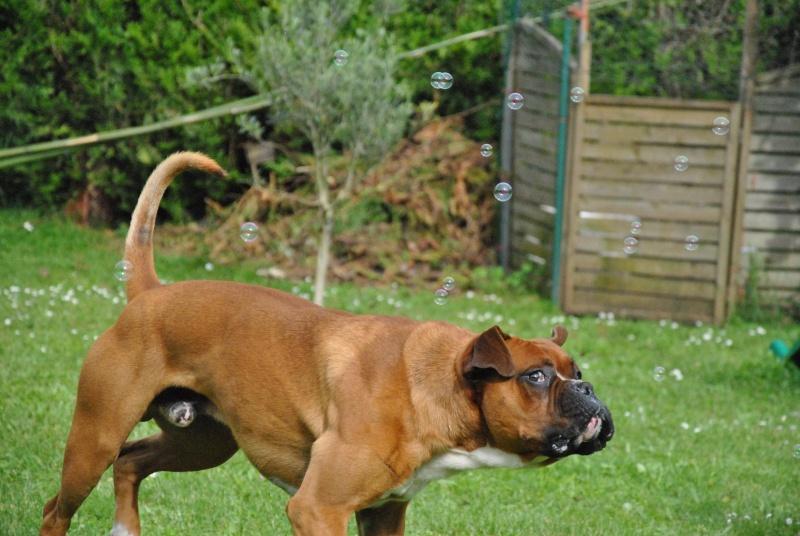 photos de vos chiens au naturel - Page 10 Dsc_1314