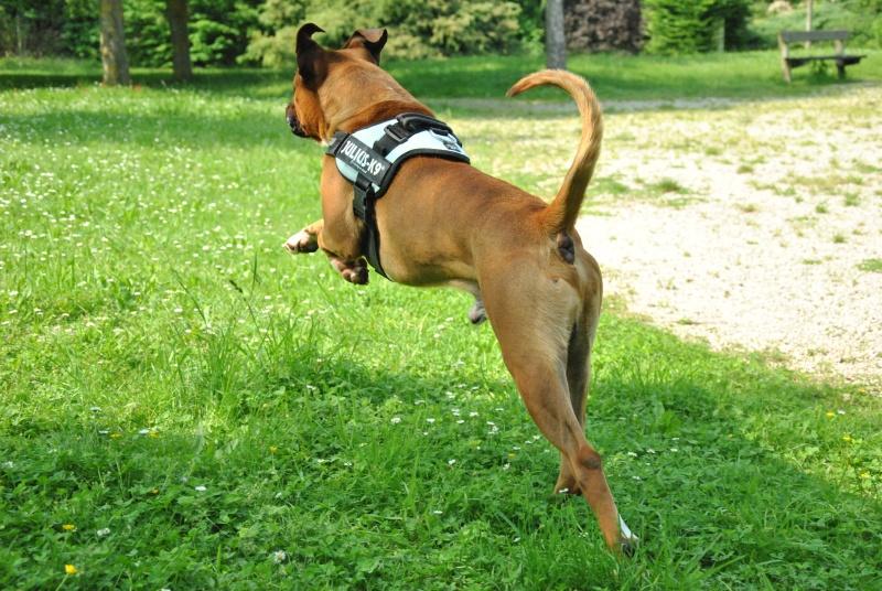 photos de vos chiens au naturel - Page 10 Dsc_1412