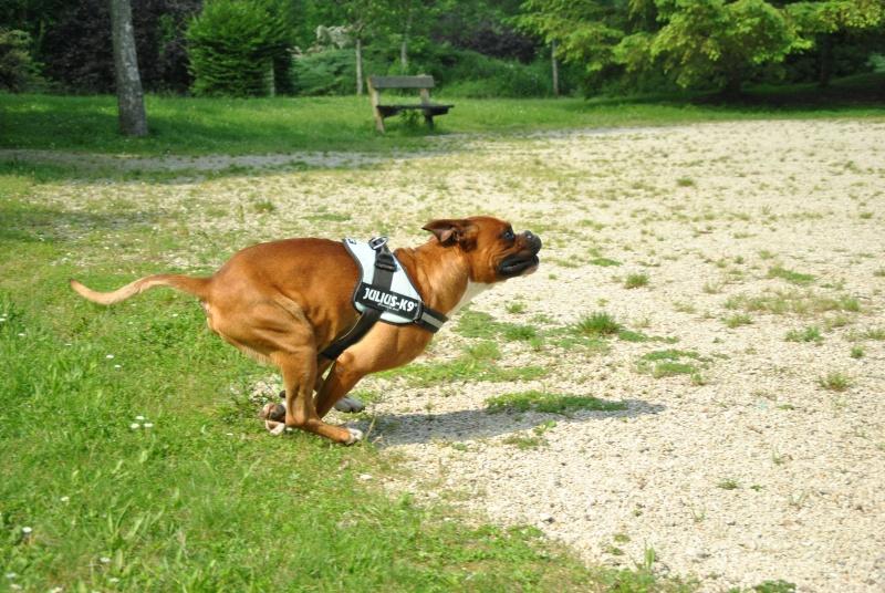 photos de vos chiens au naturel - Page 10 Dsc_1413