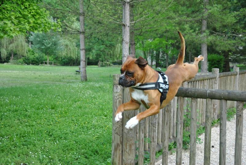 photos de vos chiens au naturel - Page 10 Dsc_1511