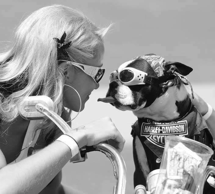 DOG'S & BIKES ATTITUDES - Page 3 13012711