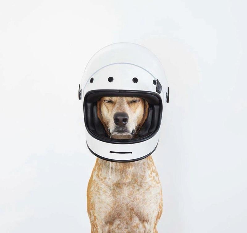 DOG'S & BIKES ATTITUDES - Page 3 13015210