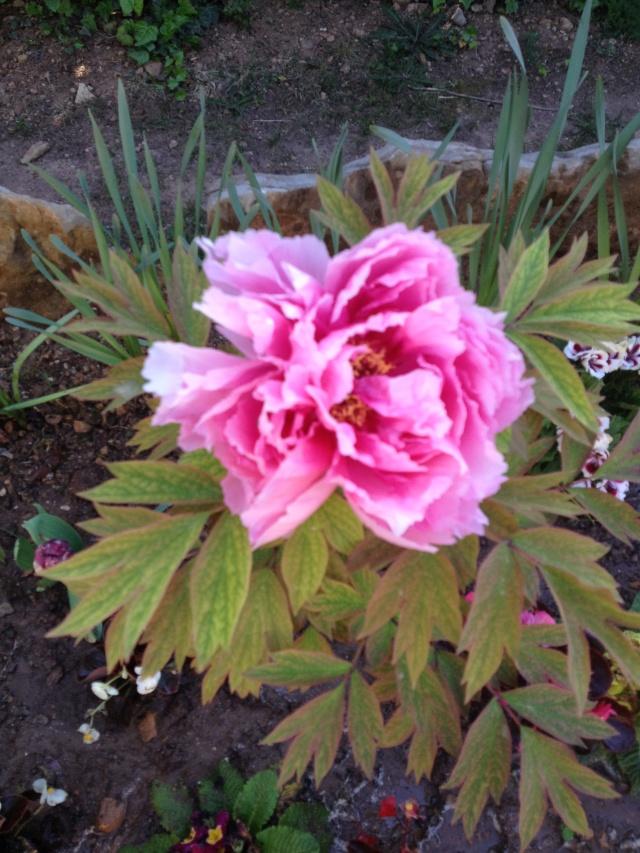 Floraisons du mois d'avril - Page 19 00612