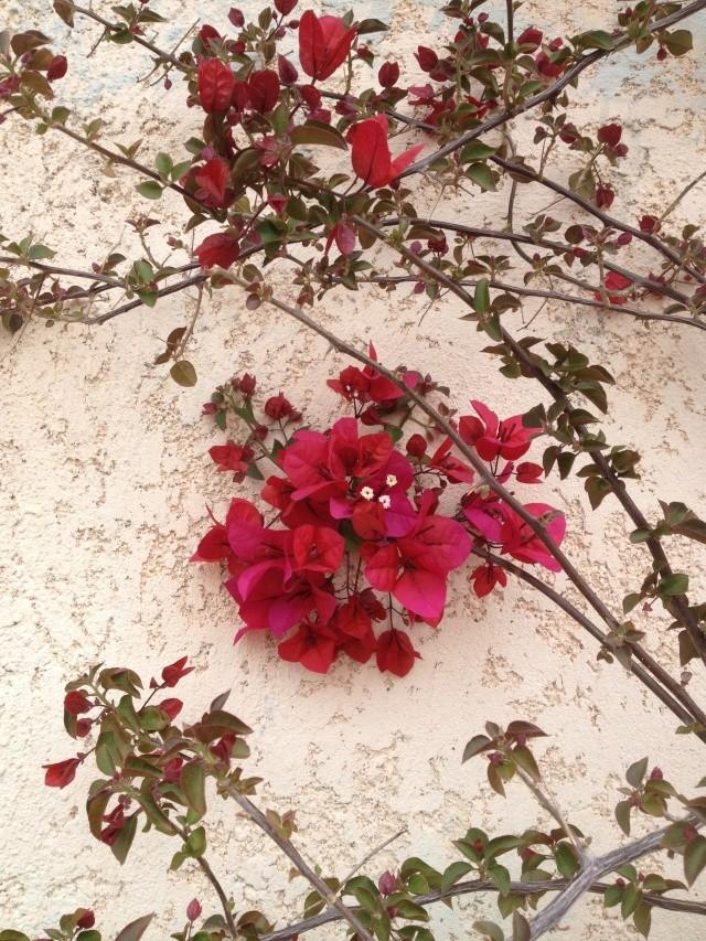 Floraisons du mois d'avril - Page 19 01010