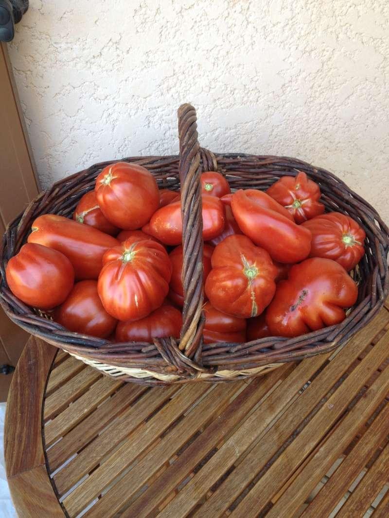 Pourquoi mes tomates n'ont pas poussé? 01910