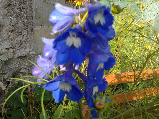 Blue..........bleu !!! - Page 3 Delphi10