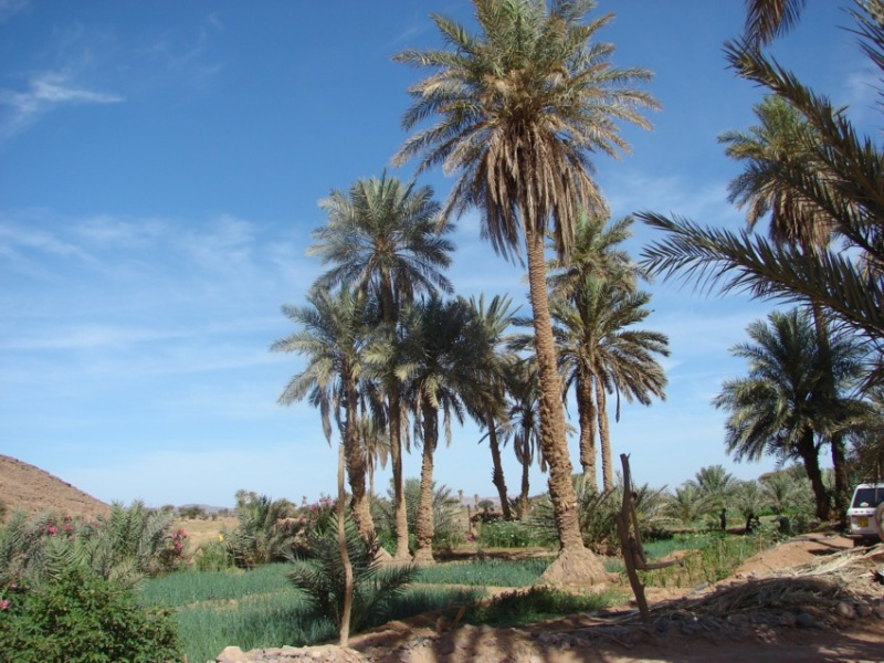 Retour Maroc avril 2016 - Page 2 11910