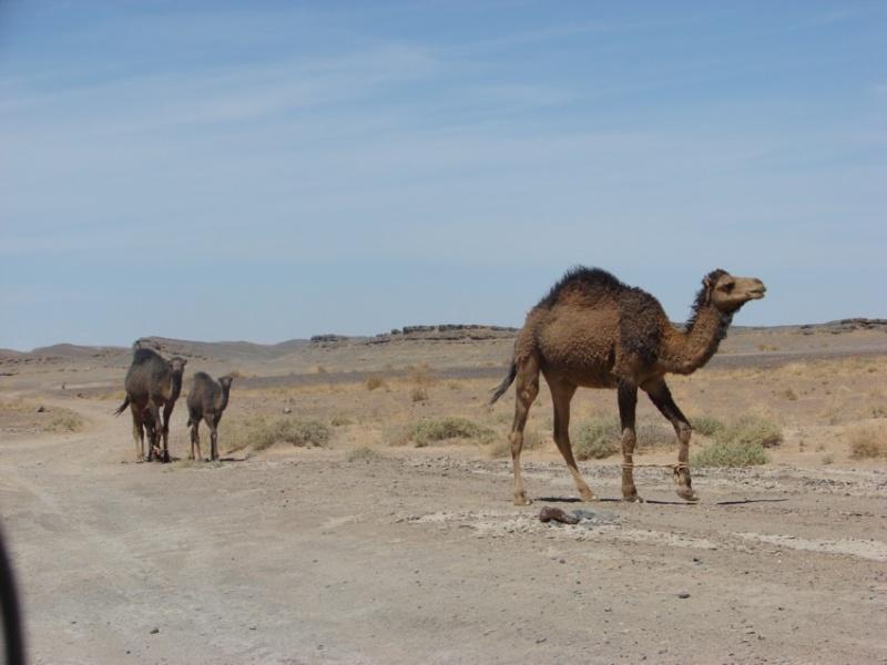 Retour Maroc avril 2016 - Page 2 13510