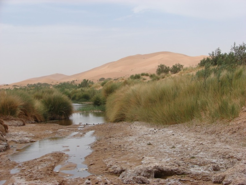 Retour Maroc avril 2016 - Page 2 17610
