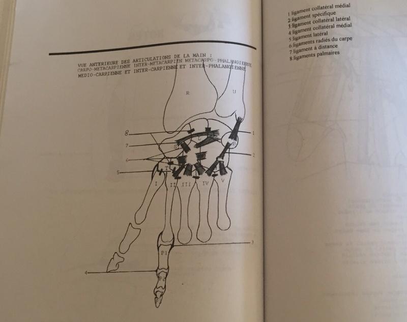[Culture Médicale] Apprendre l'Anatomie par le coloriage Captur18