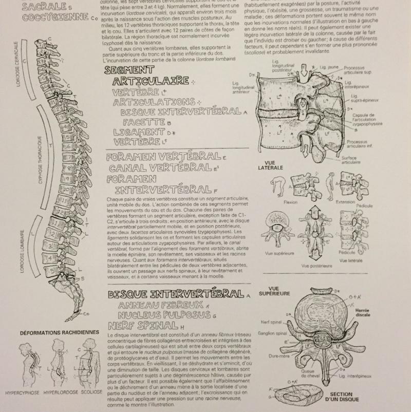 [Culture Médicale] Apprendre l'Anatomie par le coloriage Captur19