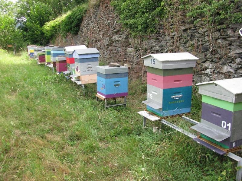 Visite au rucher de Nathalie Img_7910