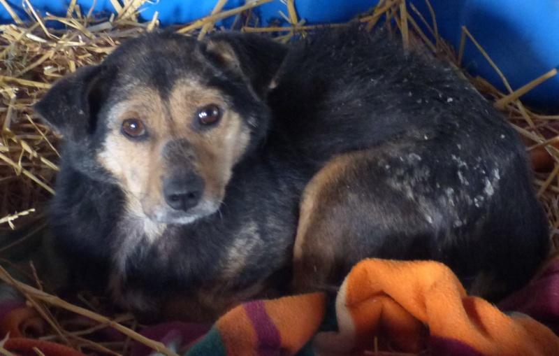 HATSU, mâle croisé, né en 2006, petite taille (Pascani)- adopté par Trish (30)- décédé  12377510
