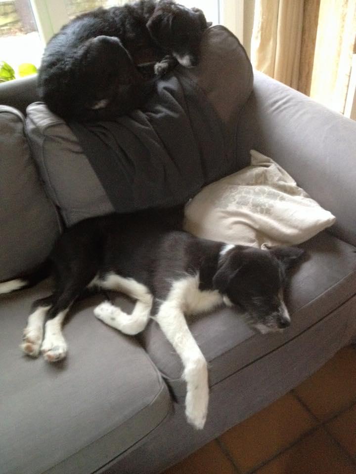 BLACK PEARL, chiot femelle, née en juin 2015 (Pascani)-REMEMBER ME LAND - adoptée par Sonia dans le 57 12799110