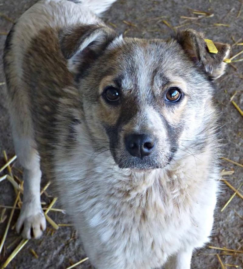 JANGO- mâle croisé - Adopté par Anne-France (Belgique) DECEDE 12814210