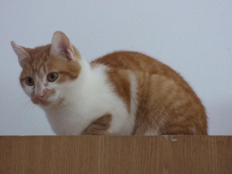PITCH, chat, jeune femelle - Pascani- En FA chez Florin - adoptée en Roumanie 13063110