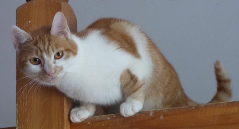 PITCH, chat, jeune femelle - Pascani- En FA chez Florin - adoptée en Roumanie 13072710