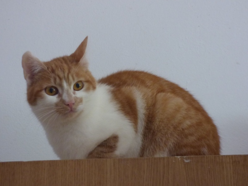 PITCH, chat, jeune femelle - Pascani- En FA chez Florin - adoptée en Roumanie 13087010