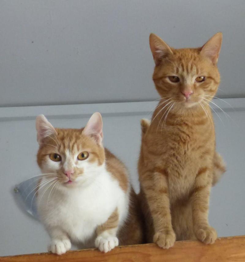 PITCH, chat, jeune femelle - Pascani- En FA chez Florin - adoptée en Roumanie 13096311