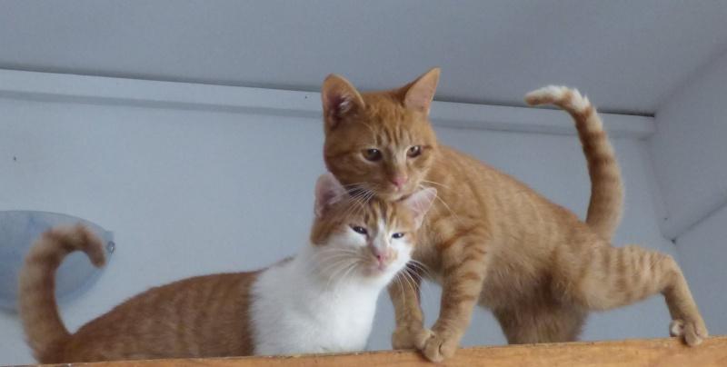 PITCH, chat, jeune femelle - Pascani- En FA chez Florin - adoptée en Roumanie 13116511