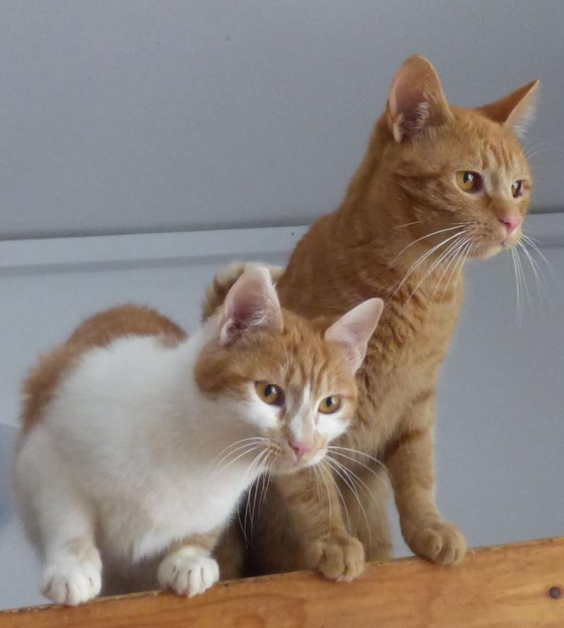 PITCH, chat, jeune femelle - Pascani- En FA chez Florin - adoptée en Roumanie 13123211