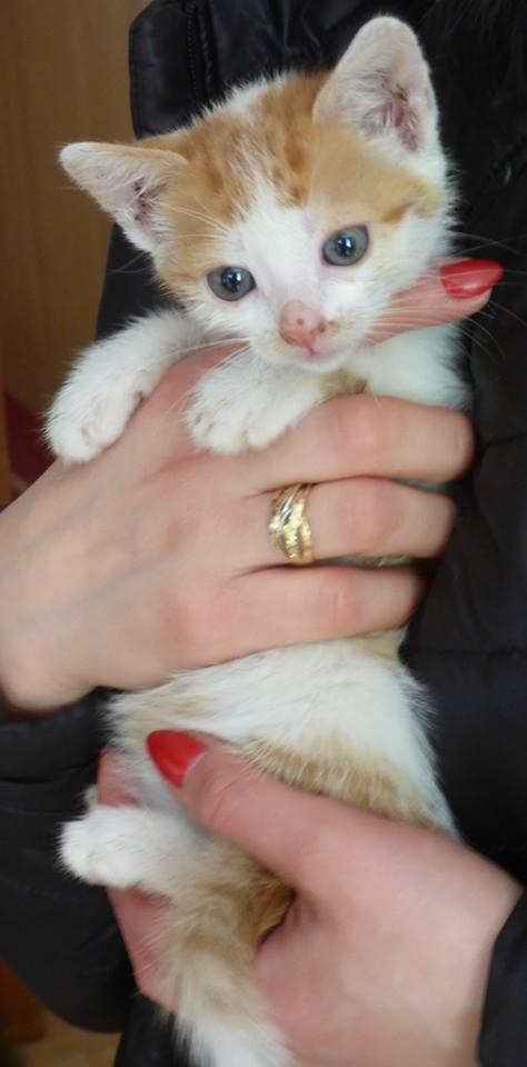 MITSY ( ex SATINE), chaton femelle née en mars 2016 - Pascani - adoptée par Abysse (dpt92) - PARTIE REJOINDRE LES ETOILES le 3 juillet 2017 .... 13238910
