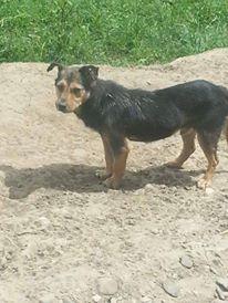HATSU, mâle croisé, né en 2006, petite taille (Pascani)- adopté par Trish (30)- décédé  13401211