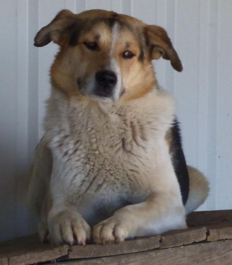 CALU, mâle, taille moyenne, né en 2012 (Pascani) - REMEMBER ME LAND-DCD 14521010