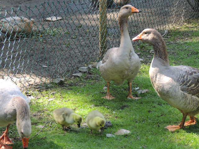 MAI-JUIN les animaux au printemps : vos plus belles photos Dscn4310
