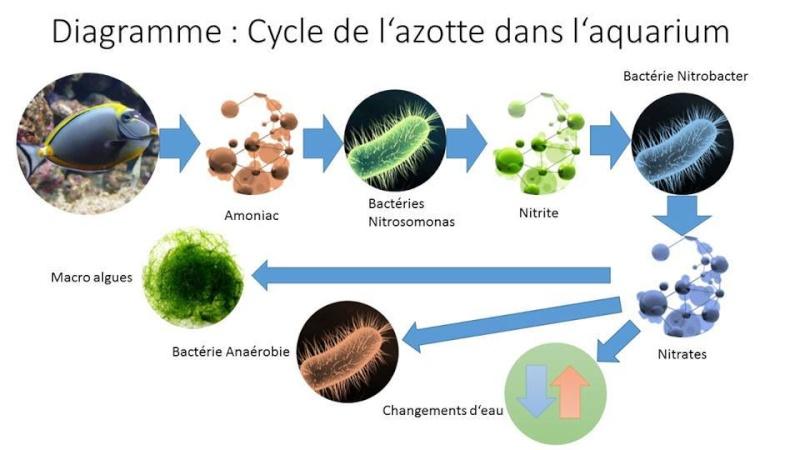 Pour mieux comprendre le principe de l'implantation bactérienne du bac 12990910