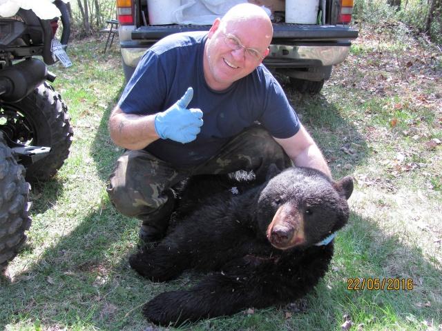 Le piégeage de l'ours noir avec le piège Fournier Img_0017