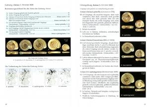 gastéropodes aquatiques Gloer_12