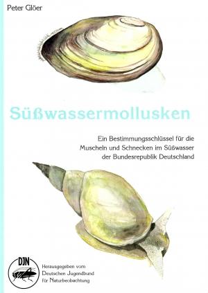 gastéropodes aquatiques Gloer_13