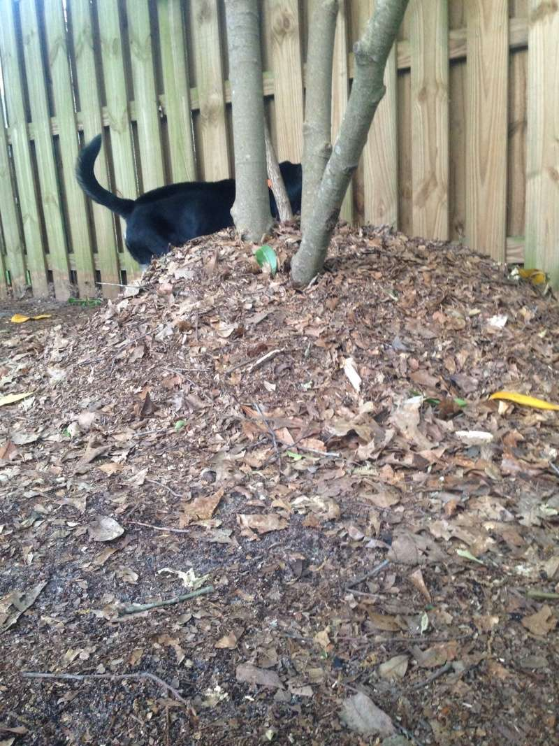 WANTED: Pictures of Compost Bins 2016-065