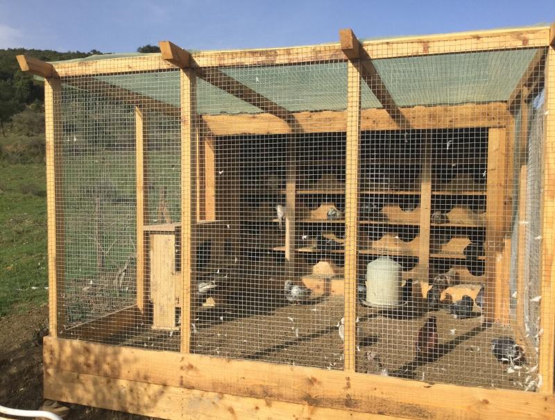 L'élevage de Robin  Image12