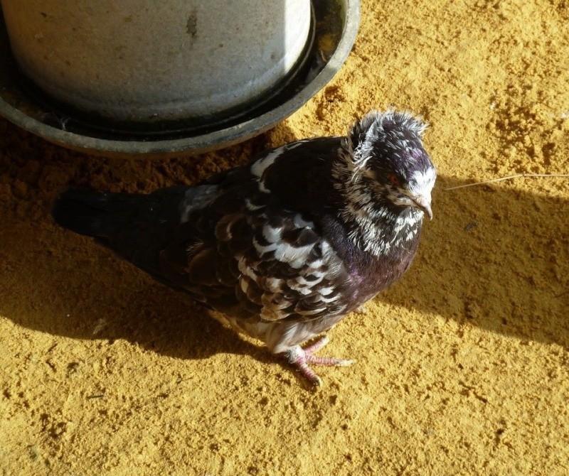 L'élevage de Robin  Image22