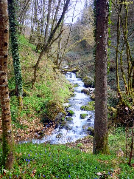 ruisseau - Le ruisseau des pervenches avec Bernard... 0110
