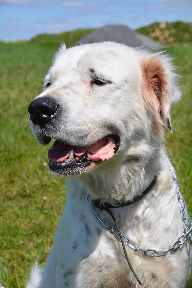 MONZON chien croisé dogue /retriever 6 ans -  Asso Orfee en pension dept 79 13063410