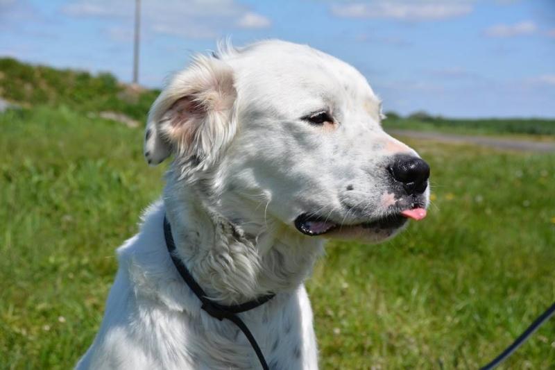 MONZON chien croisé dogue /retriever 6 ans -  Asso Orfee en pension dept 79 13087610