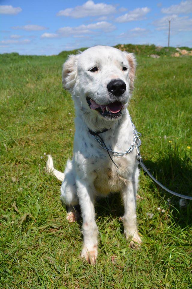 MONZON chien croisé dogue /retriever 6 ans -  Asso Orfee en pension dept 79 13123010