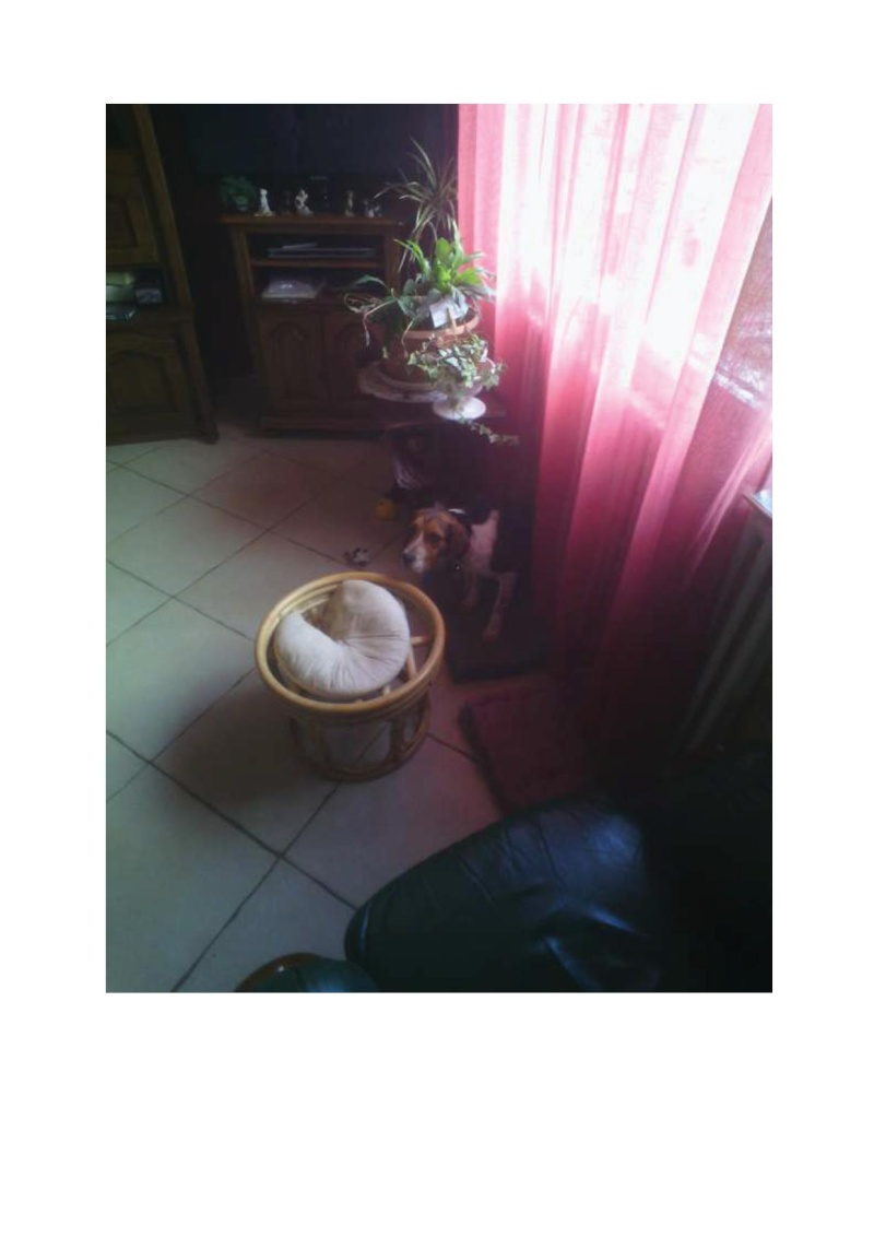 ELGA  beagle née 01/10/2014  adoptée par MARYLINE  ( 79 ) Orphye10