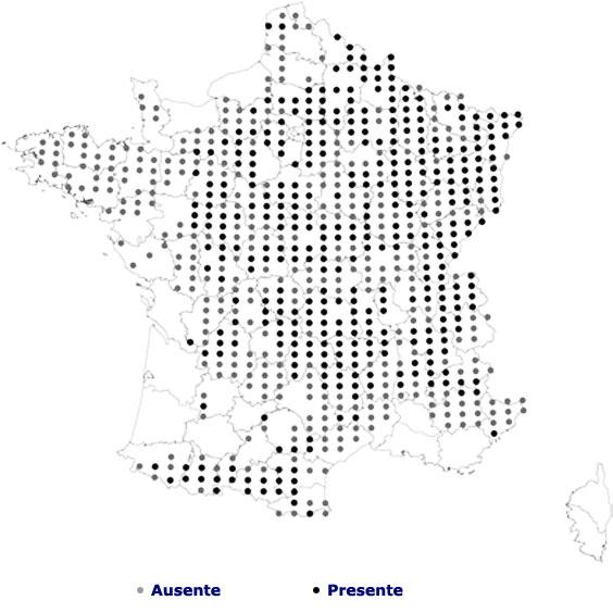 Monitoreado de las poblaciones de Becada en Francia Nei_fr10