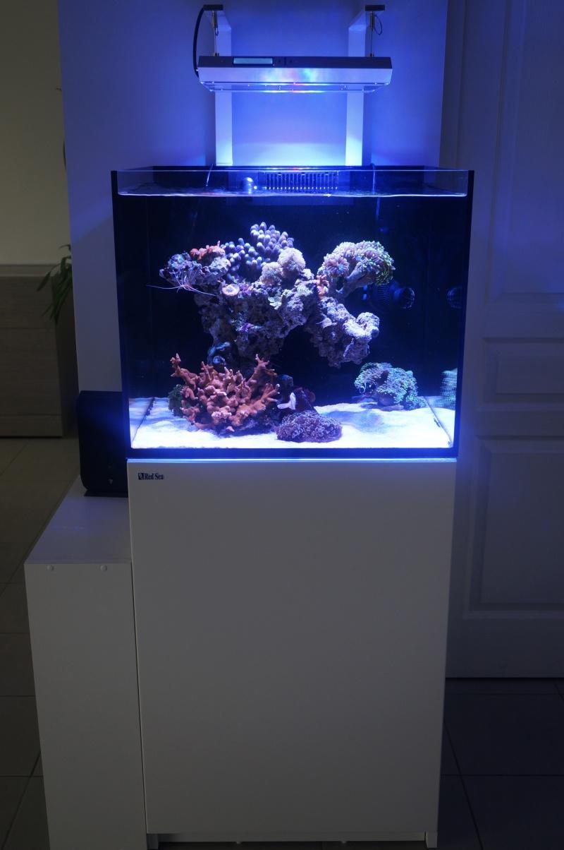 Reefer 170 d'Amstaff Dsc01410