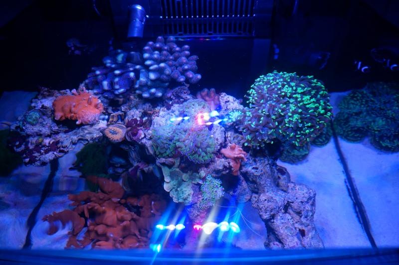 Reefer 170 d'Amstaff Dsc01413