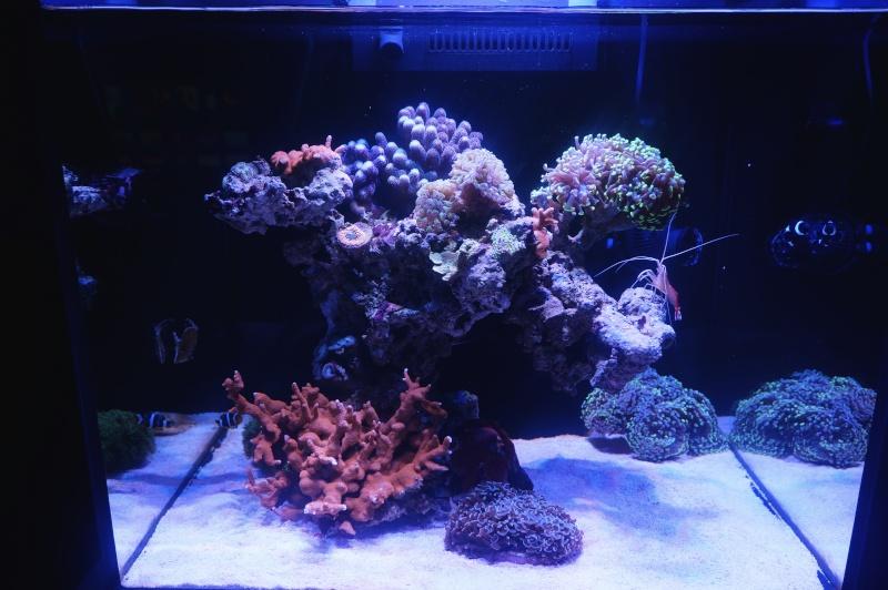 Reefer 170 d'Amstaff Dsc01414