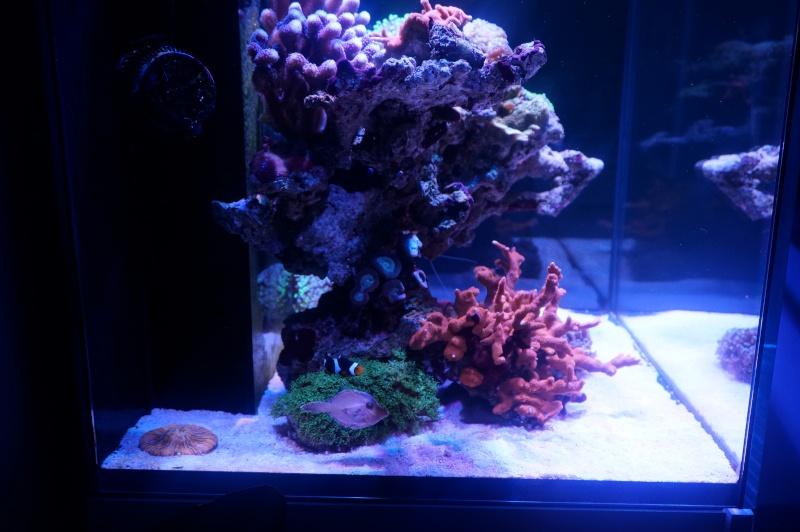Reefer 170 d'Amstaff Dsc01415