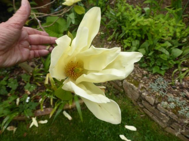 avril, jardin fébrile - Page 6 22-04-11