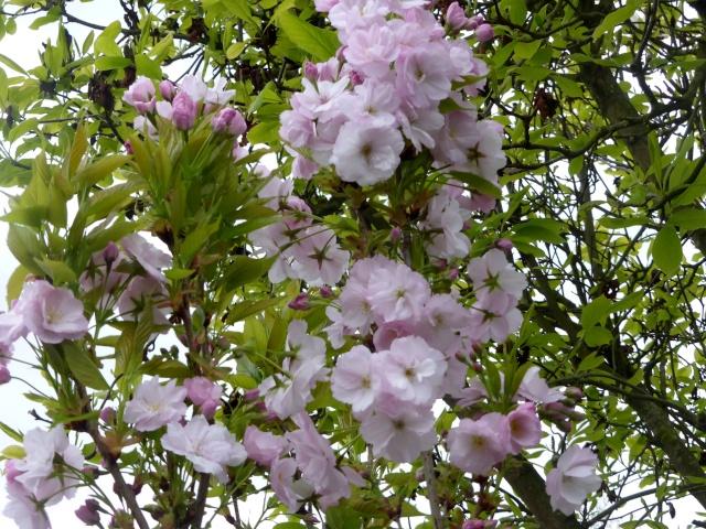 avril, jardin fébrile - Page 6 27-04-19